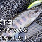 【奥多摩 渓流釣り】多摩川支流の大丹羽川の下流へ、ヤマメを釣りに行ってきました。(入渓ポイント、駐車場など解説)