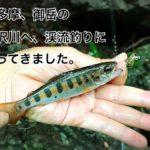 奥多摩 御岳の琴沢川へ、渓流釣りに行ってきました。(入渓ポイント 駐車場など解説)
