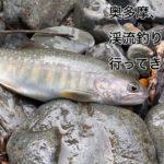 【2020年 奥多摩】日原川の人家下に渓流ルアー釣りに行ってきました。