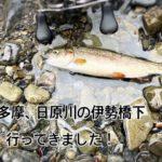 【2020年 奥多摩】日原川 伊勢橋下に、渓流ルアー釣りで、放流魚を、狙ってきました。