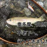 【2020年 奥多摩】日原川 不老下に、渓流ルアー釣りに行ってきたら、爆釣でした。