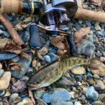 【秋川 渓流ルアー釣り】中流域に、解禁後の、放流魚を狙ってみました。